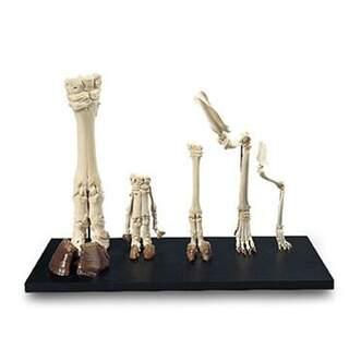 Sammlung von großen Säugetieren Fuß