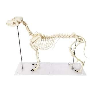 Hundeknochen in Kunststoff