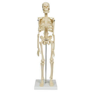 Micro Skelett 45 cm