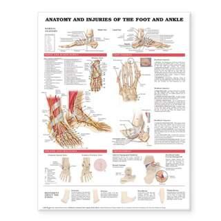 Anatomie & Verletzungen am Fuß & Knöchel laminiertes Poster Englisch