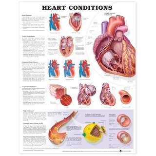 Herzerkrankung laminiertes Poster