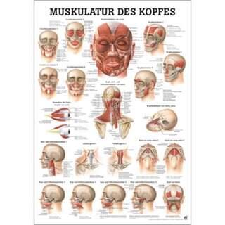 Kopfmuskulatur Deutsch / reines Latein