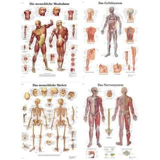 Poster-Paket - Anatomie