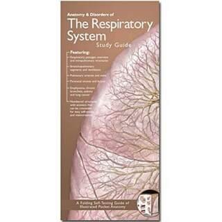 Atmen anatomische Broschüre