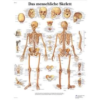 Skelettplakat reines Latein 51x67 cm