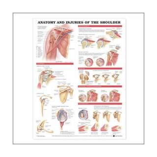 Poster - Anatomie und Verletzungen des Schultergelenks laminiert