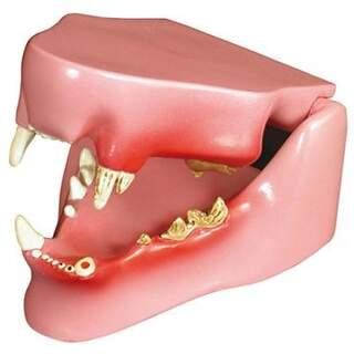 Cat Jaw mit gesunden und kranken Zähnen