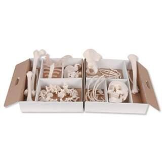 Skelettknochenset für viele Zwecke. Wird in einem Karton in Raumgröße mit Griffen geliefert