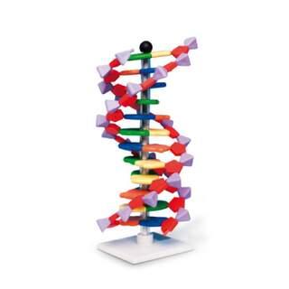 DNA-Modell - 12 Schichten