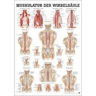Rückenmuskulatur Deutsch / reines Latein