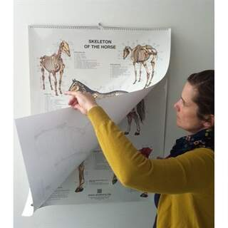 6 Pferde Poster über Flip-Format