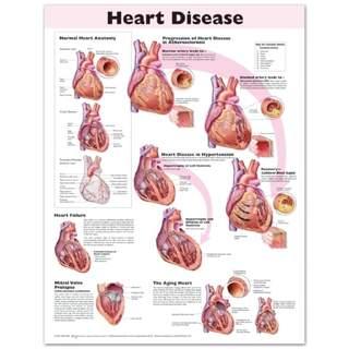 Laminiertes Poster zu Herzkrankheiten in englischer Sprache
