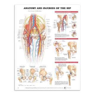 Anatomie & Verletzung im Hüftgelenk in Englisch