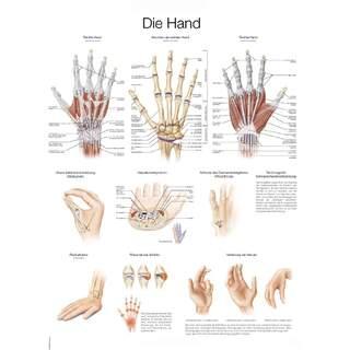 Poster mit Hand Deutsch & Englisch