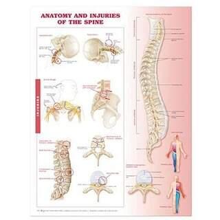 Poster - Anatomie und Pathologie der Wirbelsäule