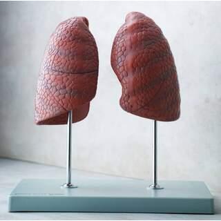 Rechte und linke Lunge, unabhängig