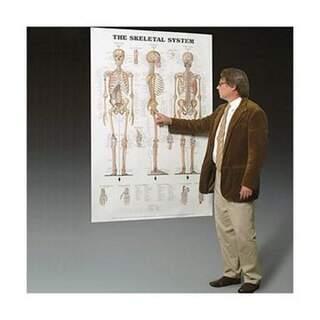 Knochen und Bänder laminiert Poster