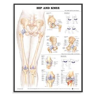 Anatomie Poster - Hüfte / Knie