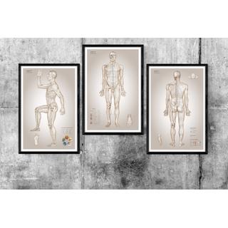 Akupunktur platte - die wesentlichen Diagramme der Akupunktur