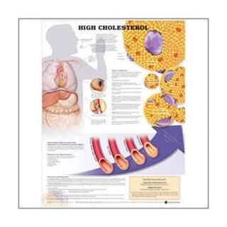 Zu hohes Cholesterin laminiert Poster mit den Ringlöchern